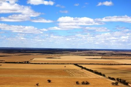 Wudinna Farmland