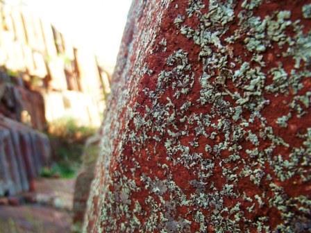 Close up Organ Pipes Rock